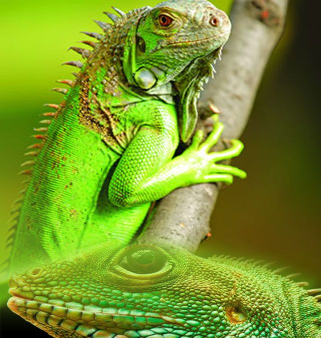 Refujio de Iguanas